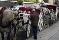 Wedding Transportation Options